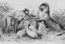 La parte del leone - favola