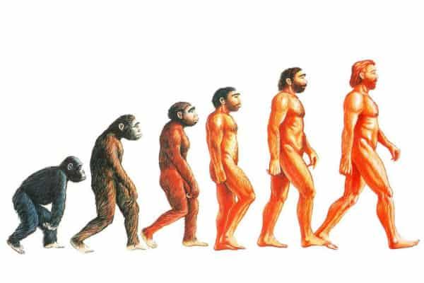 Evoluzione-delluomo