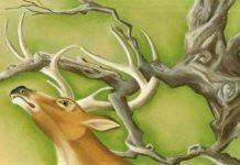 Il cervo alla fonte e il leone, favola di Esopo