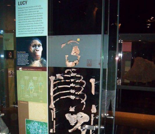 Australopiteco Lucy
