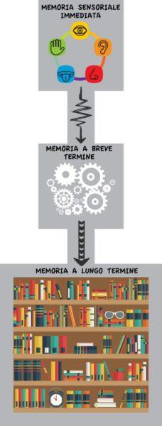 Memoria a breve termine e memoria a lungo termine