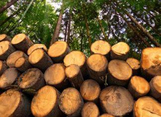 la deforestazione: cause e conseguenze ambientali