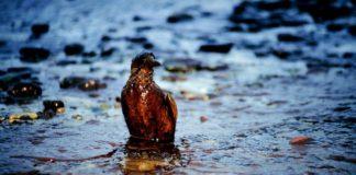 inquinamento dell'acqua o inquinamento idrico