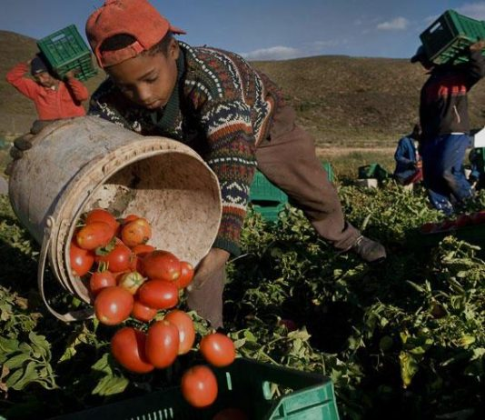Lavoro minorile: perché è così diffuso e come combatterlo