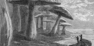 Viaggio al centro della Terra, di Jules Verne