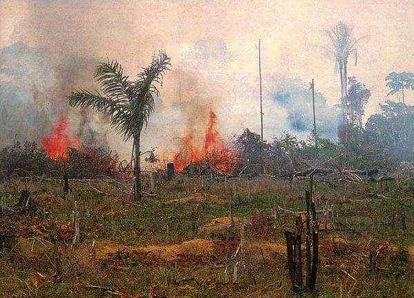 Amazzonia a rischio distruzione: una minaccia per tutti