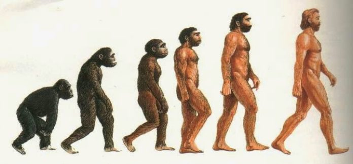 Ominazione: comparsa dell'uomo e sua evoluzione