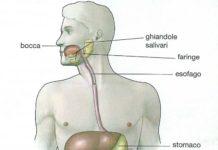 Apparato digerente e digestione riassunto facile