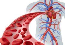 Apparato circolatorio e circolazione del sangue