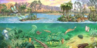 Ere geologiche: dalle prime forme di vita alla comparsa dell'uomo
