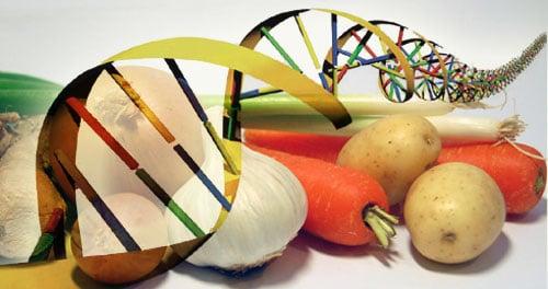 OGM: cosa sono, pro e contro, vantaggi e svantagg