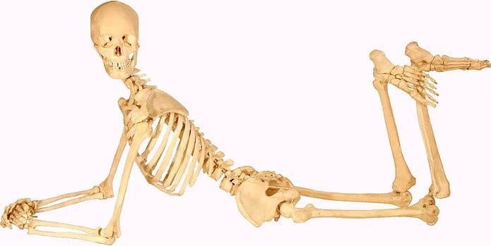 Sistema scheletrico corpo umano schema