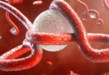 Il sistema immunitario: cos'è e come funziona