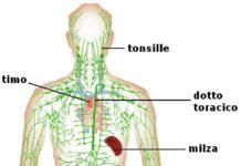 Sistema linfatico del corpo umano descrizione
