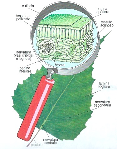 le parti della pianta