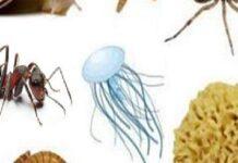 animali invertebrati